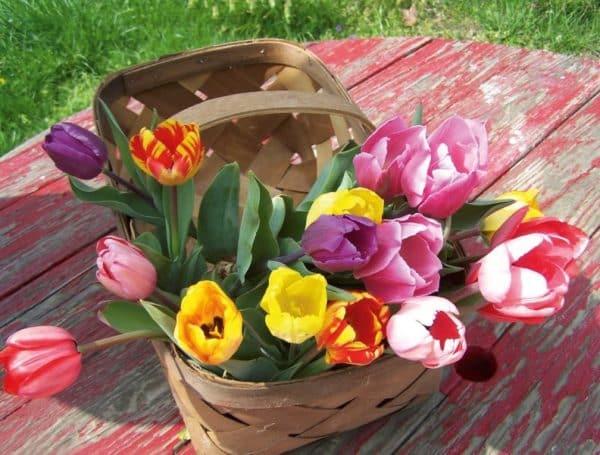 Frühlingslust<br> Messehalle<br> Ried im Innkreis