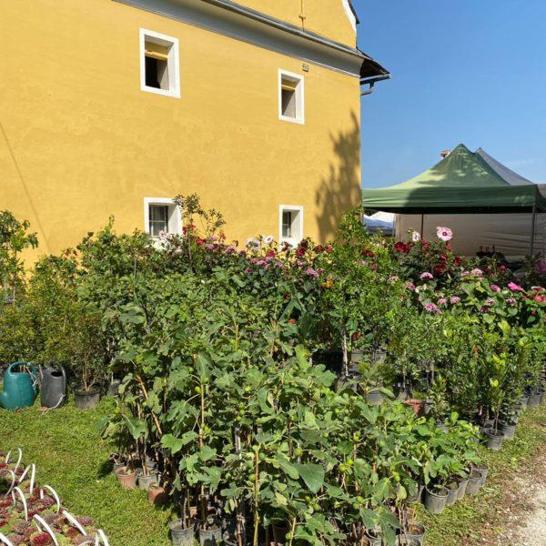 Gartenlust Schloss Grafenstein